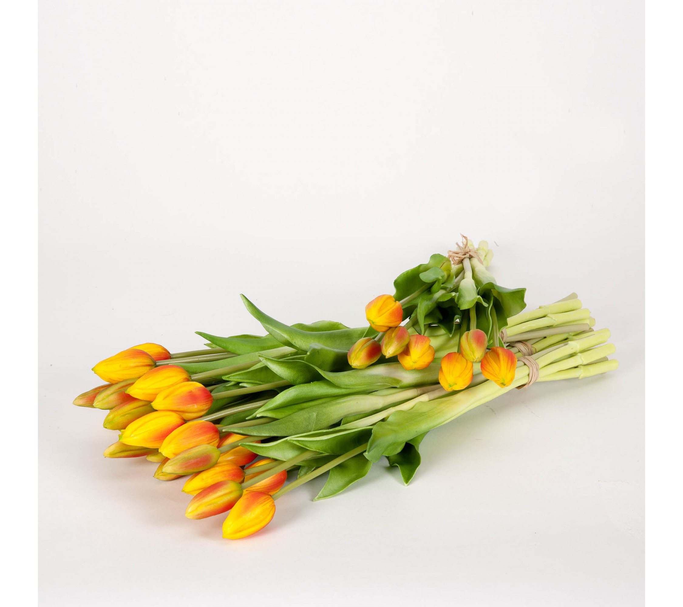 Tulpenbund Orange
